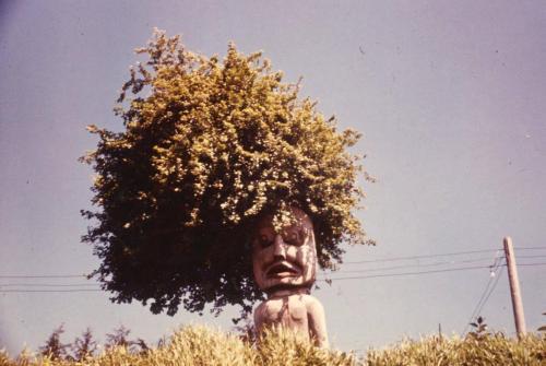 Welcome pole Gooseberry hairdo